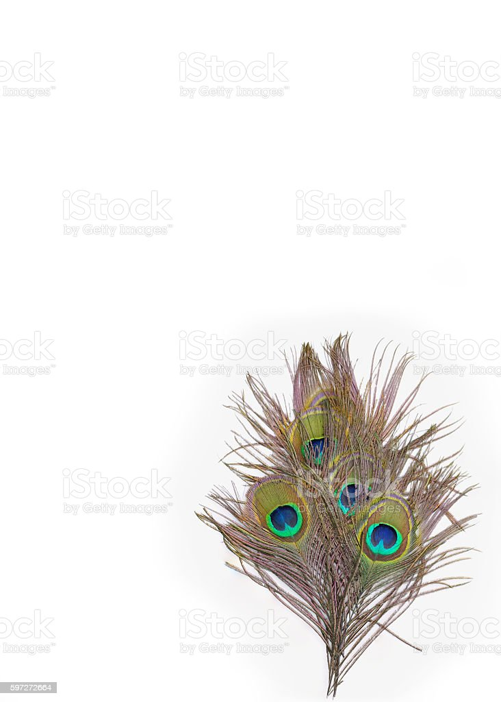 colorful peacock feathers Lizenzfreies stock-foto