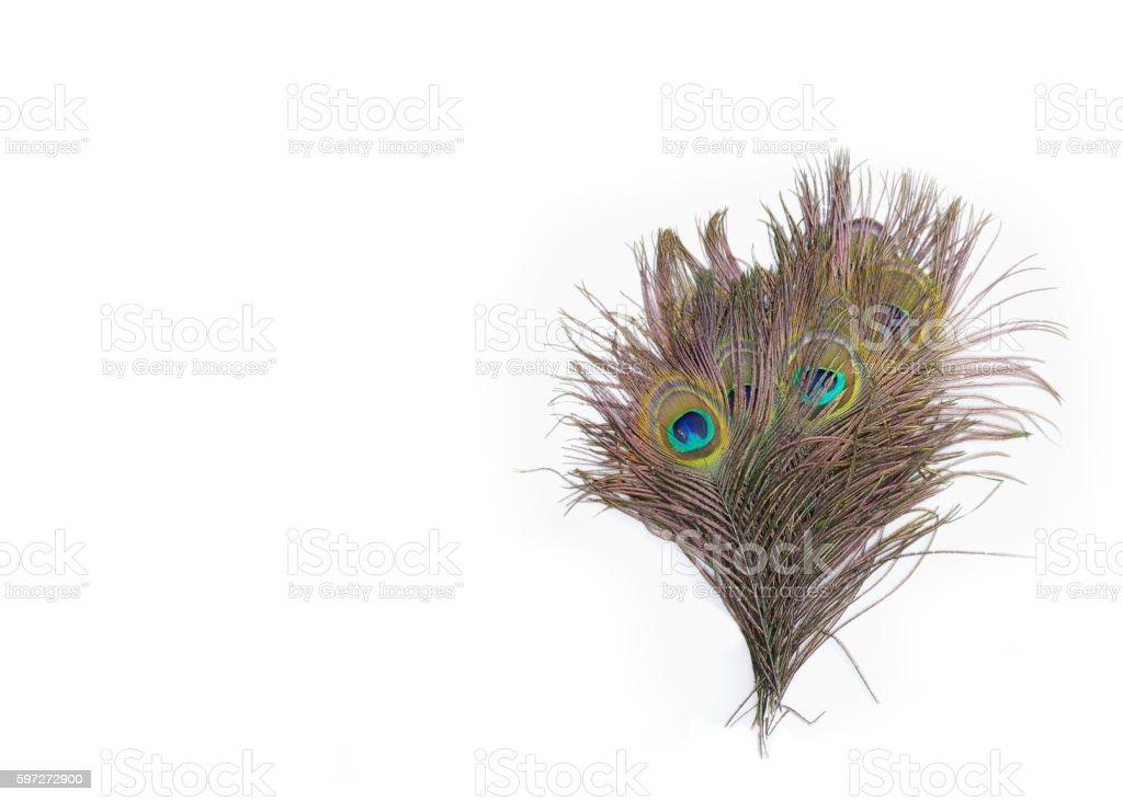 colorful peacock feathers photo libre de droits