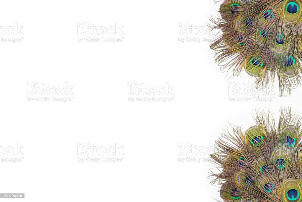 colorful peacock feathers royalty-free stock photo