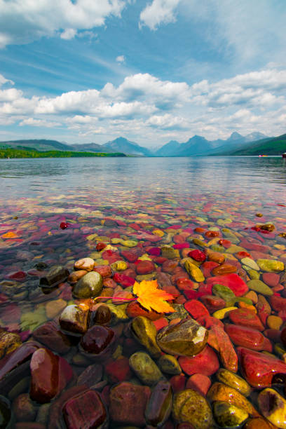 colorful pebbles and autumn leaf in lake mcdonald, glacier national park, montana - mcdonald lake stock pictures, royalty-free photos & images