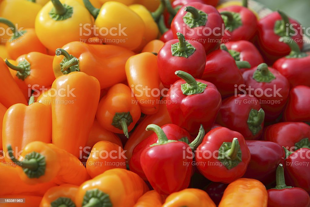 Colorful Pepper royalty-free stock photo