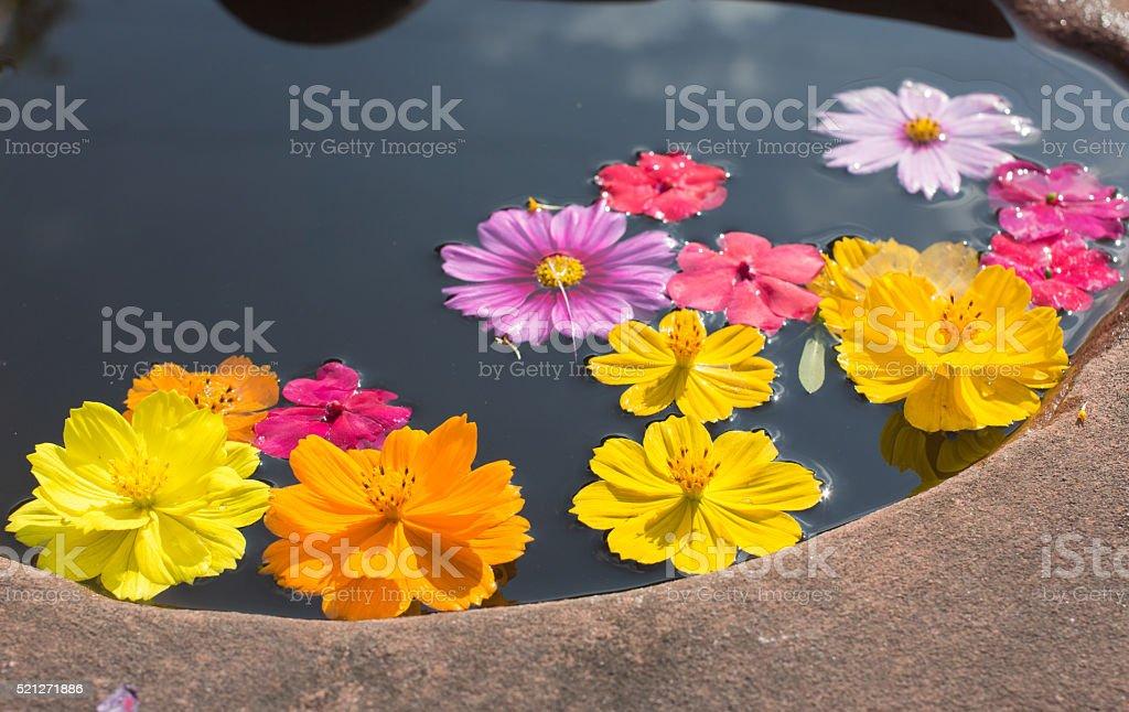 Красочные лепестками маргаритки и хризантема в пруд Стоковые фото Стоковая фотография