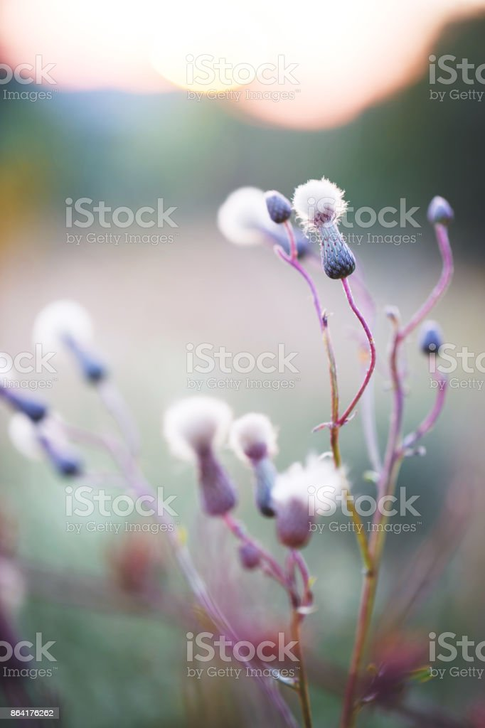 colorful photo of meadow wild beautiful ping flowers on orange sunset background in autumn forest. Outdoor nature photo royalty-free stock photo