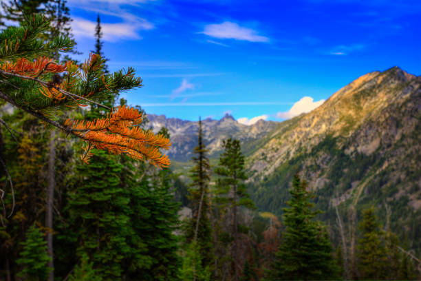 Colorful Pine Tree in Mountains stock photo