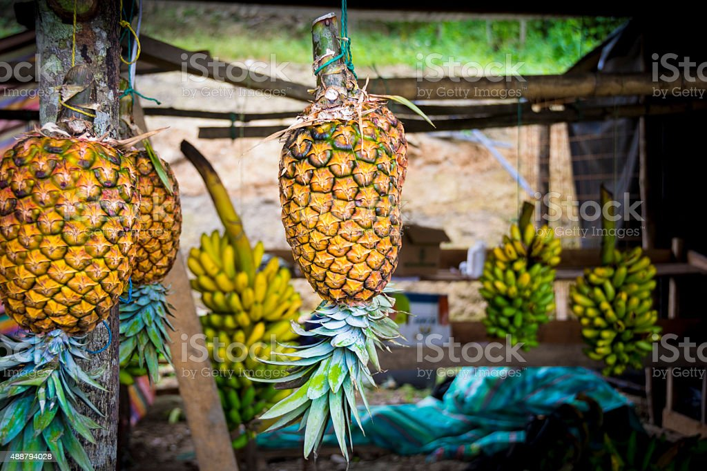 Colorful pineapples hanging stock photo