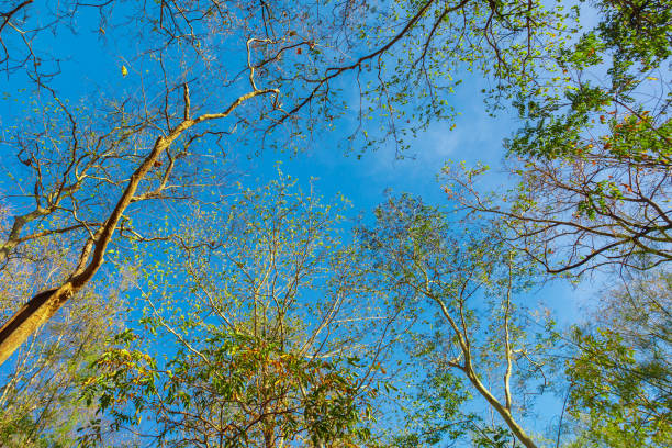 Colorful poplar trees stock photo