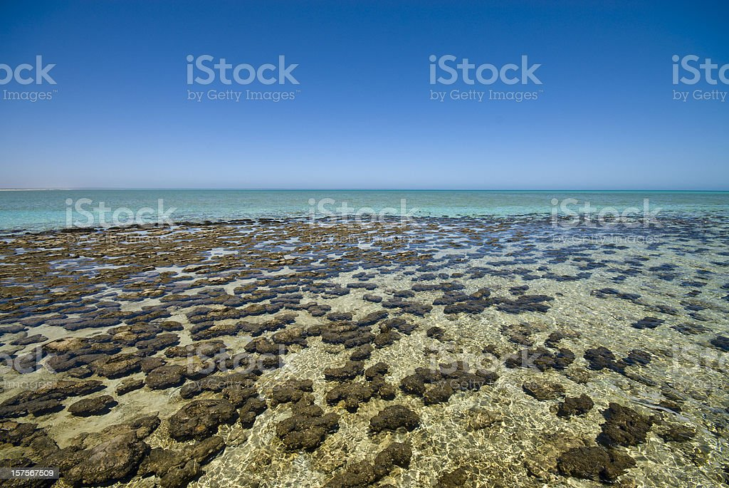 A colorful portrait of Stromatolites at Shark Bay stock photo