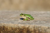 Colorful poses of green frog in nature environment
