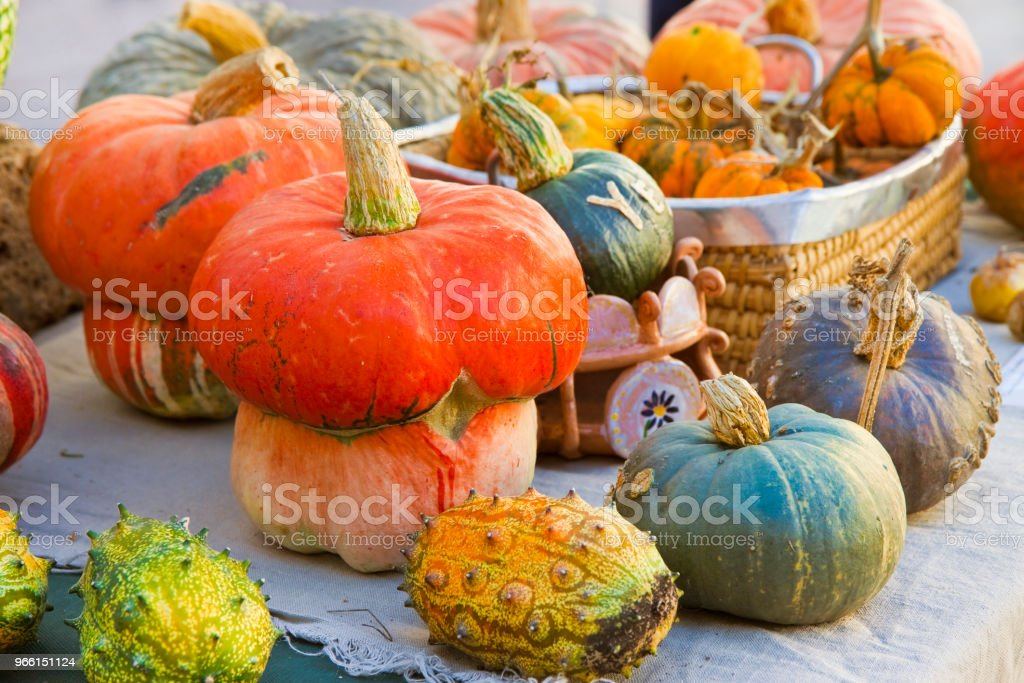 Colorful pumpkins assortment of different sizes and types - Royalty-free Agriculture Stock Photo