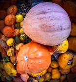 Colorful pumpkins collection lying on ground
