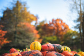 Autumn background: stack of colorful pumpkins in park.