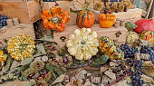 colorful pumpkins and gourds in autumn