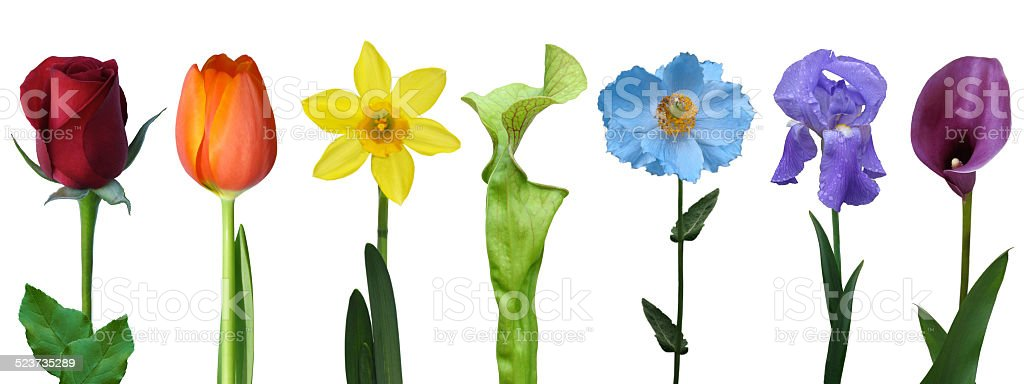 colorful rainbow collage of isolated flowers cover photo stock photo