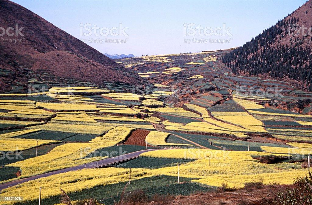 colorful rape fields royalty-free stock photo