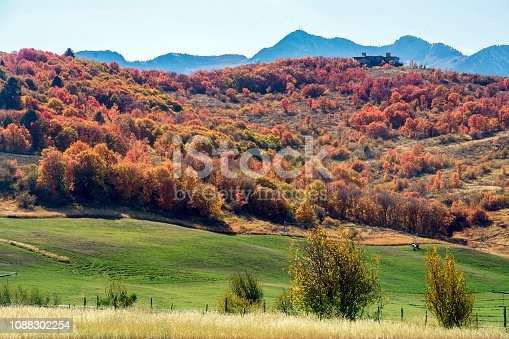 colorful trees in the northern utah mountain range near ogden in the fall