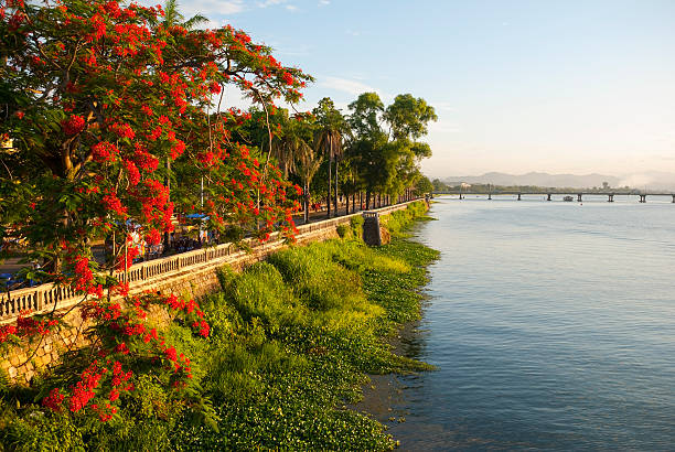 Perfume River and red blossoms in Hue, Vietnam Colorful red blossoms in a tree beside the Perfume River in Hue, Vietnam huế stock pictures, royalty-free photos & images