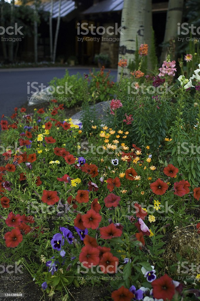 Colorful Red Flowers and Summer Garden Landscaping at Luxury Home royalty-free stock photo