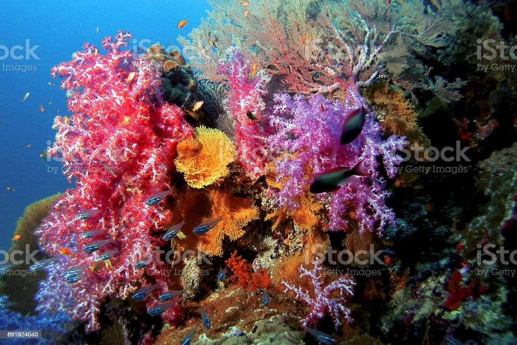 Colorful reef stock photo