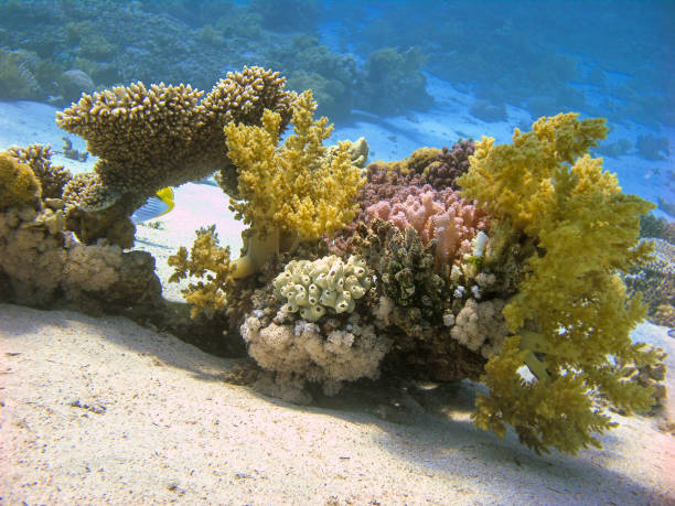 Colorful Reef with Soft Corals Underwater. stock photo