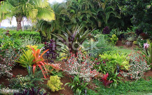 A colorful resort garden on Hawaii