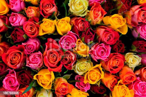 istock Colorful roses background 168733348