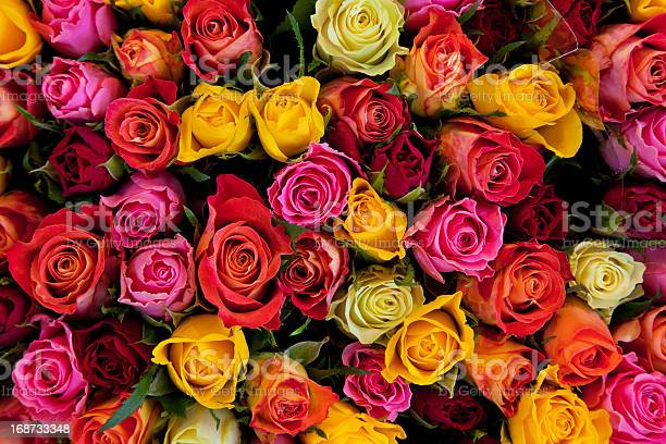 Colorful roses background picture id168733348?b=1&k=6&m=168733348&s=612x612&h=v7ulftobnah8icrxj5sycs4wkezdh3i9icroyomlfs8=
