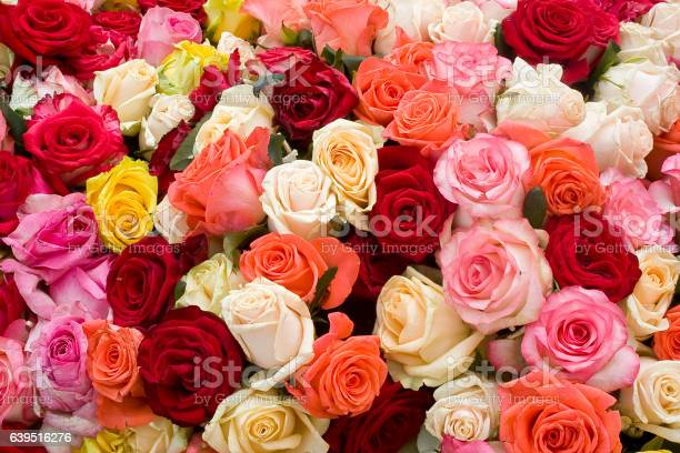 Colorful roses background picture id639516276?b=1&k=6&m=639516276&s=612x612&h=3rqx3u6pa epiir8 txoscejkzwmru4o1buya wfvqu=