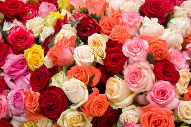 Colorful roses background picture id639516276?b=1&k=6&m=639516276&s=612x612&w=0&h=olcgm04 ss2xnylydcyxk0qbowtntrh4mwjwbawl2um=
