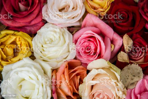 Colorful roses background picture id691719794?b=1&k=6&m=691719794&s=612x612&h=8dqtgvkpqaii1dzio6gou8kyd0kuvym7fcg ky5lzwo=