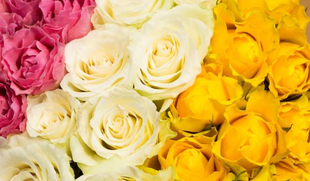 Colorful roses picture id1153723864?b=1&k=6&m=1153723864&s=612x612&w=0&h=hjqpjtxddri3mbfpdh4h oueahwfvkuwoq7yadagrja=