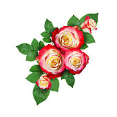 istock Colorful roses with leaves in a corner arrangement isolated on white background. Flat lay. Top view. Isolated object . 1094891698