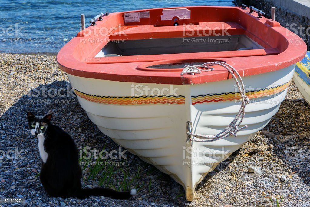 Colorful rowboat and Greek cat on the beach stock photo