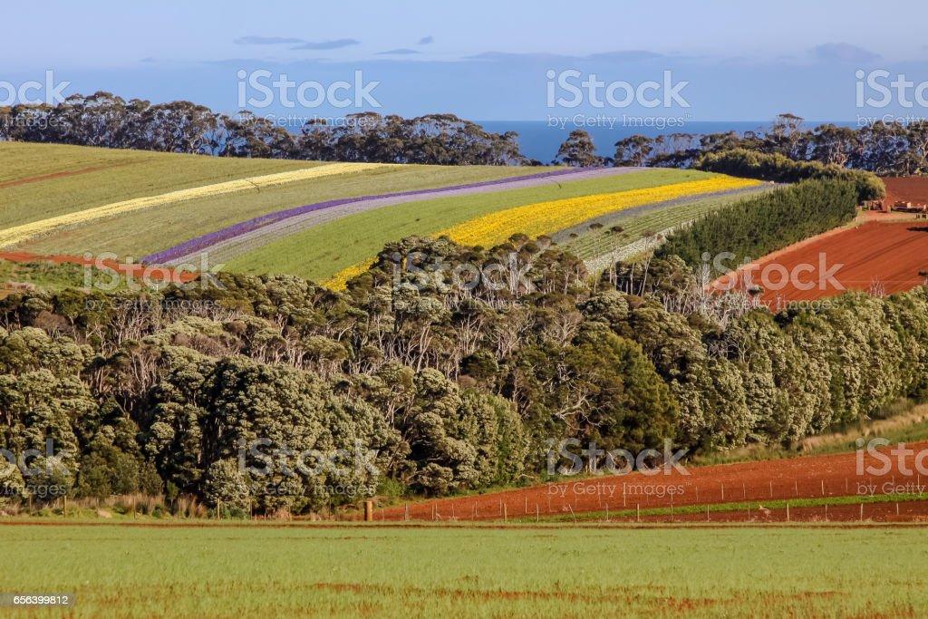 Malerischen bunten Blumenwiesen in der Nähe von Stanley – Foto