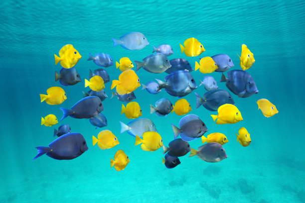 colorful school of tropical fish below surface - tropikalna ryba zdjęcia i obrazy z banku zdjęć