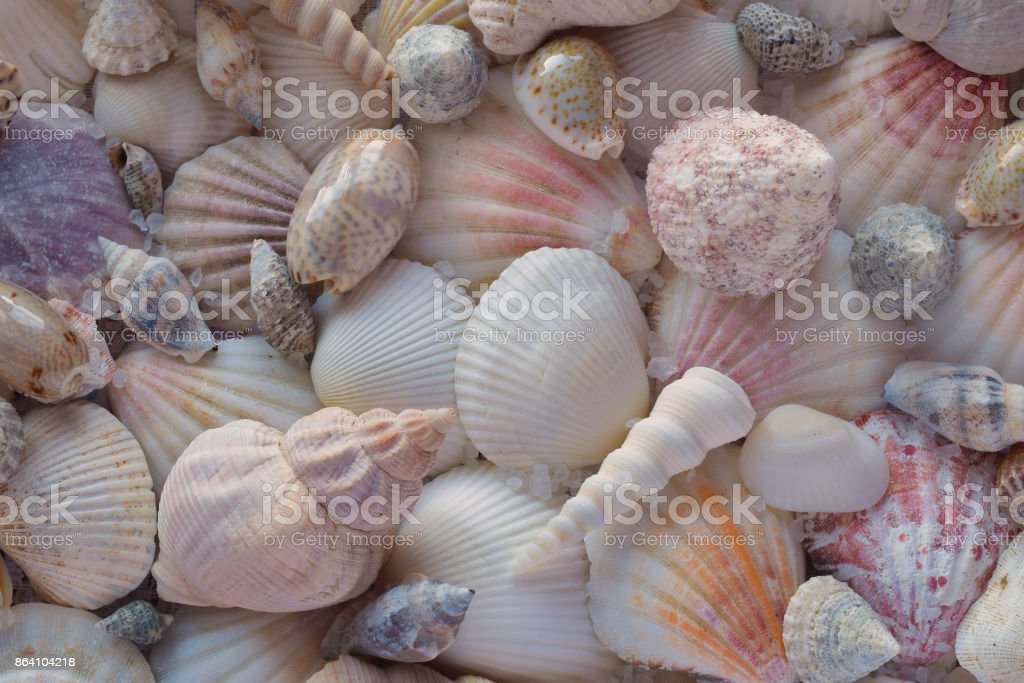Colorful sea shells background royalty-free stock photo