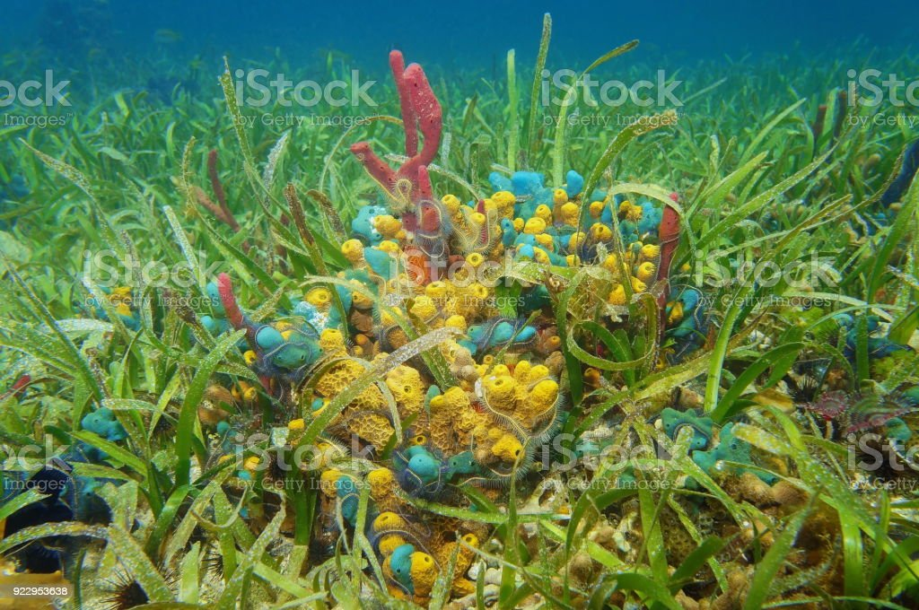 Esponjas de mar colorido bajo el agua - foto de stock