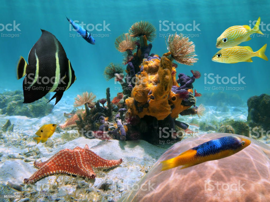 Colorful seabed in the tropics stock photo