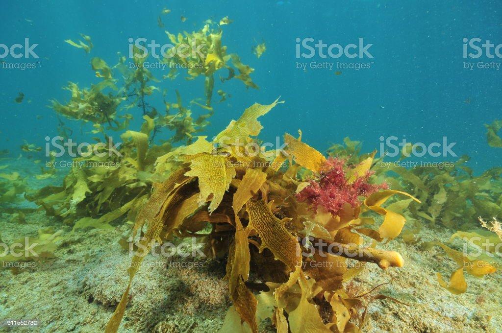 Coloridas algas flotantes - foto de stock
