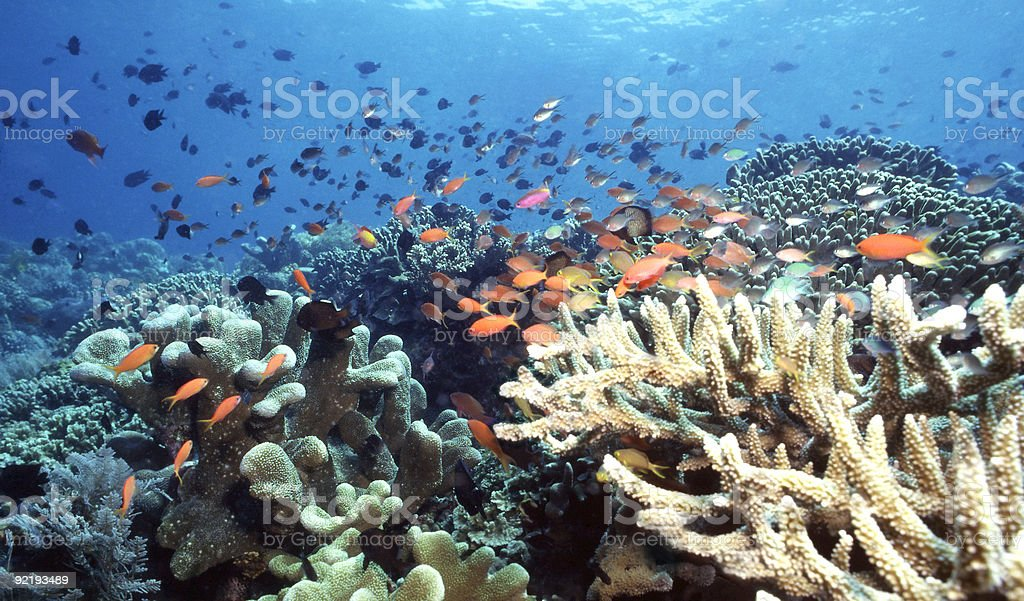 Colorful shallow Indonesia Coral Reef royalty-free stock photo