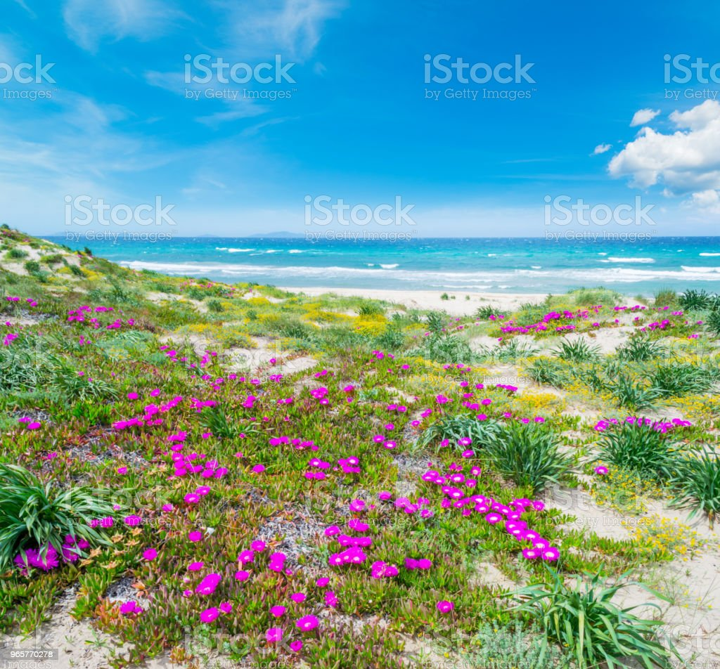 Colorful shore in Platamona beach - Royalty-free Beach Stock Photo