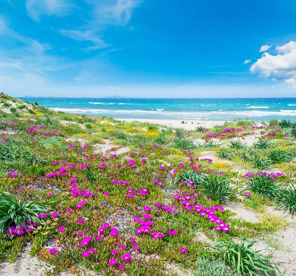 Kleurrijke Kust In Platamona Strand Stockfoto en meer beelden van Blauw