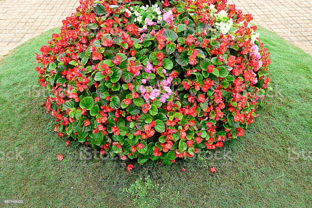 Colorful shrub stock photo