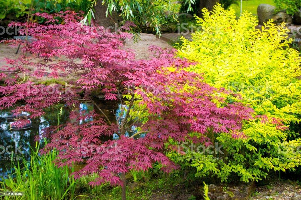 Colorful Shrubs In A Japanese Garden Royalty Free Stock Photo