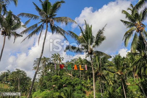 Colorful sign Love near rice fields terraces in the background. Island Bali, Indonesia. Tegallalang, Ubud, Bali. Sign from Colorful letters in the crowns of coconut palms.
