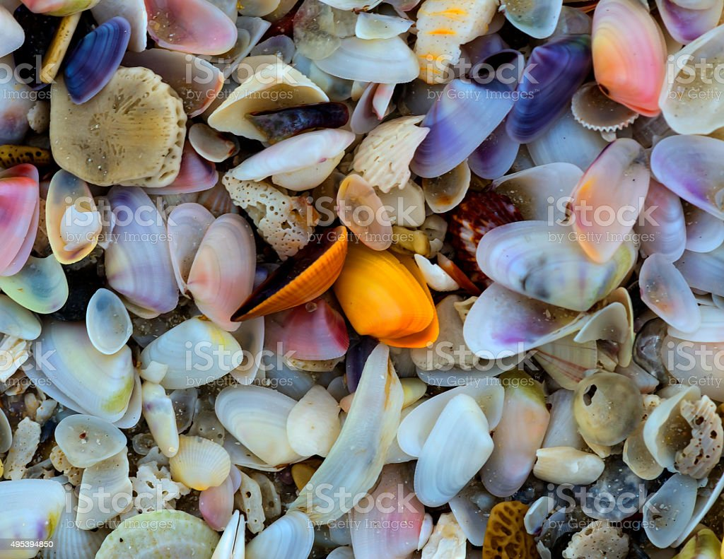 Colorful small shells stock photo