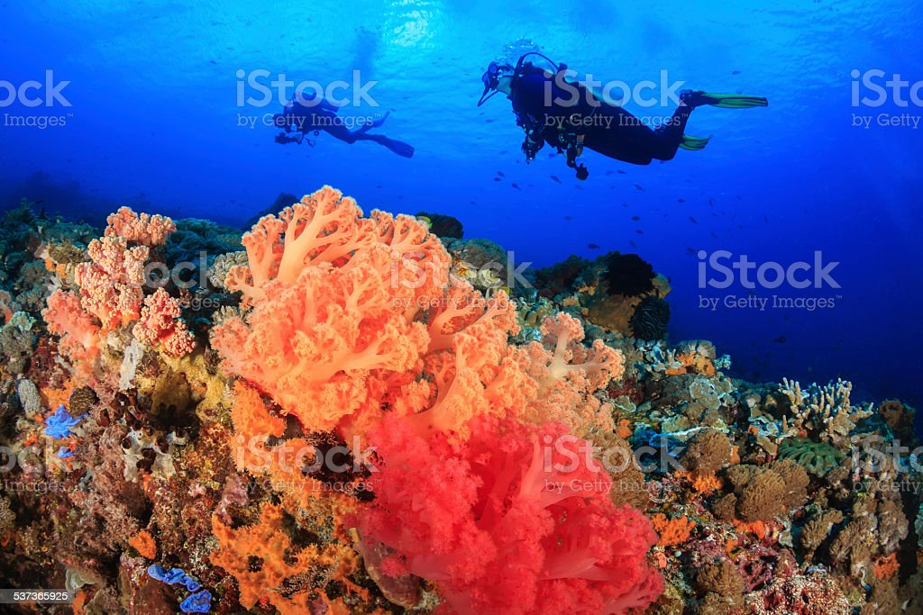 Colorful Soft Corals an Divers stock photo