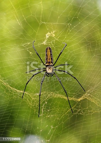 Colorful spider on spider web