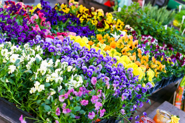 Colorful spring flowers at a market stall stock photo