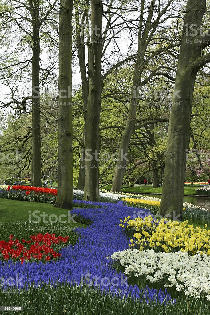 Colorful Spring Flowers in the Park in Keukenhof Gardens Netherlands stock photo