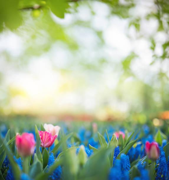 Bunte Frühlingsblumen – Foto
